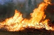 Лесные пожары в Выксунском районе