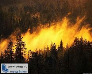 В Выксе судят виновника лесных пожаров 2010-го года