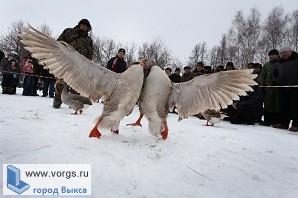 В Павлово скоро пройдут Всероссийские гусиные бои