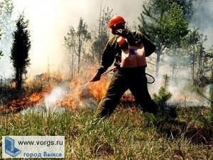 В Выксе введен запрет на посещение лесов