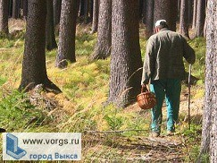 В Выксе грибник заблудился в лесу