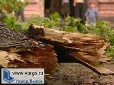 В Выксе за одни сутки упало 3 дерева