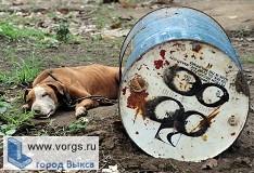 Организаторы собачьего концлагеря будут наказаны